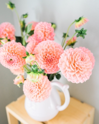 Wander and Rose Dahlia Bundle